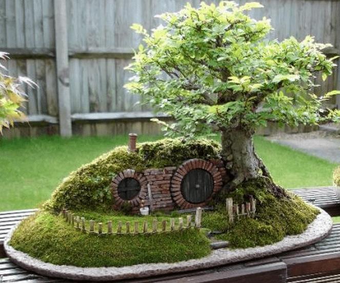 Bonsai Haus miniature trees bonsai trees tooxta of